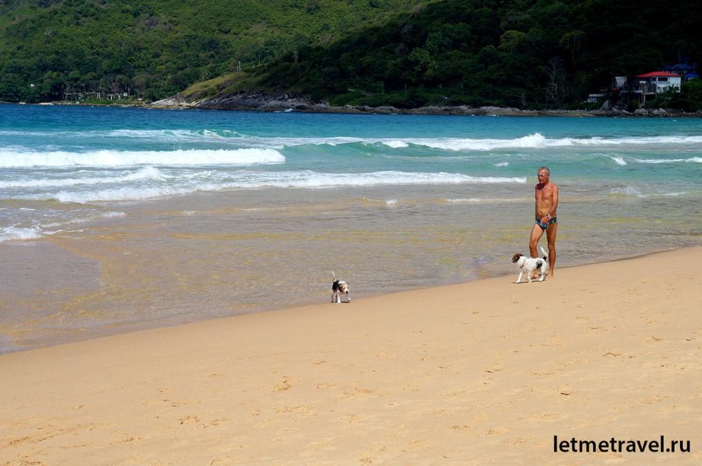 Утренняя прогулка с собаками
