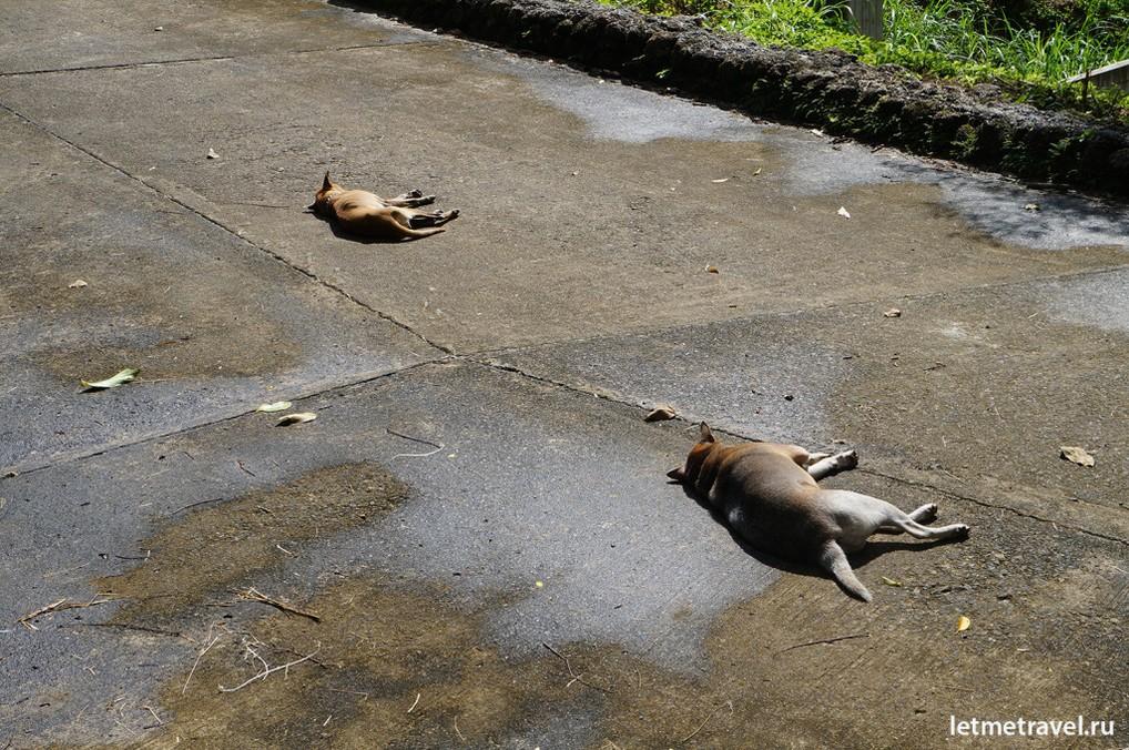 Местные жители греются на солнышке