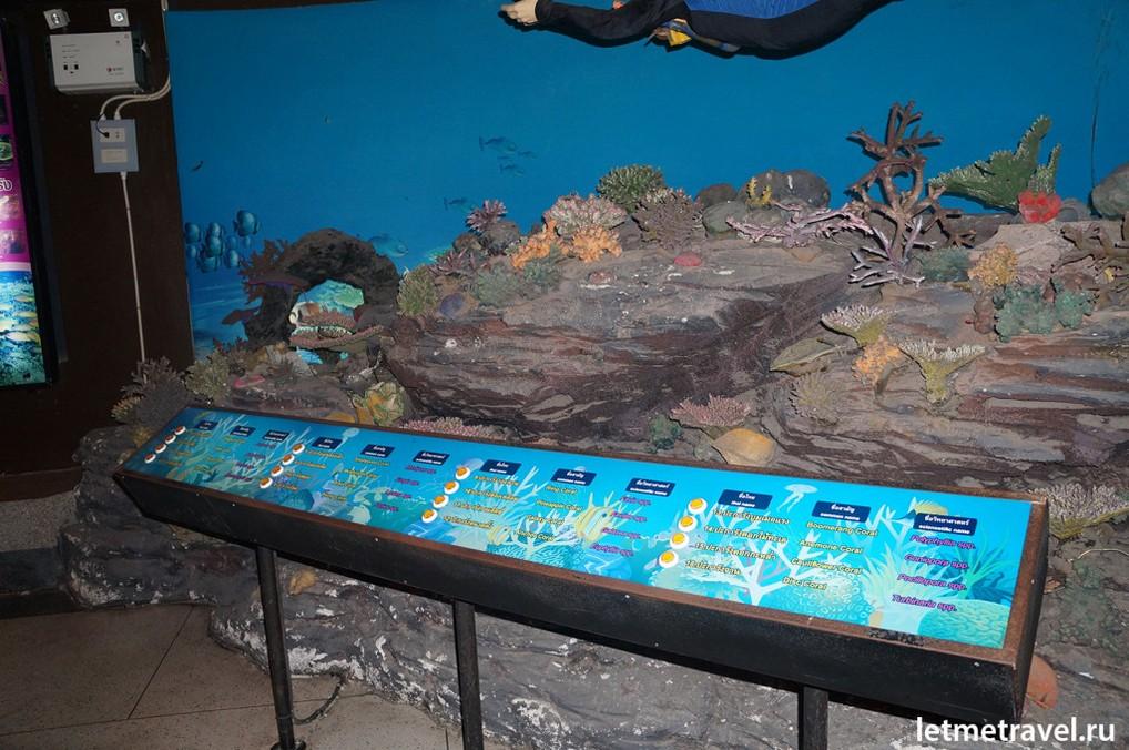 Стенд с кораллами
