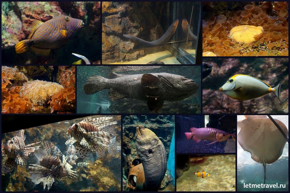 Обитатели Океанариума