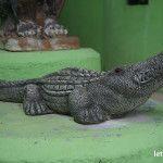 Что посмотреть на Самуи: Крокодиловая Ферма на Самуи
